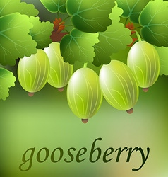 Green juicy sweet gooseberry on a branch for your vector