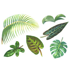 set of tropical exotic plants vector image vector image