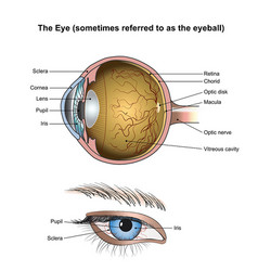 The eye vector