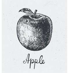 Hand drawn apple engraving style hand vector