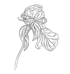 Peony flower ink sketch on white background vector
