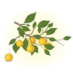 Yellow plum branch vector image