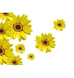 Flowers sunflower isolated on white floral vector
