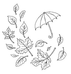 doodle maple leaves and umbrella vector image