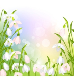 Spring flowers snowdrops natural background vector