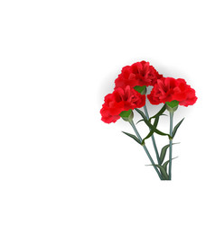 realistic red flower carnation isolated white vector image