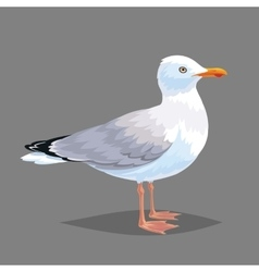 Realistic bird seagull on a grey background vector