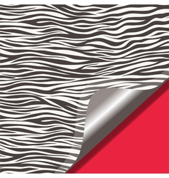 Zebra texture and red background vector image