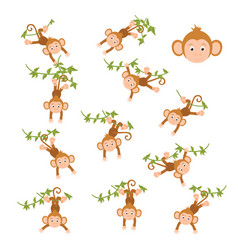 monkey on a vine vector image vector image
