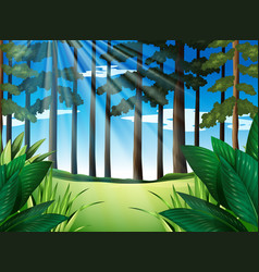 Forest scene with trees at daytime vector
