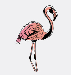 Hand-drawn bird flamingoengraving stencil style vector