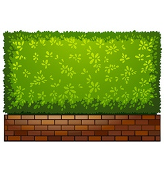 A landscaping green plant vector image