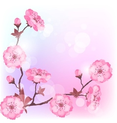 Spring cherry flowers natural background vector