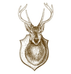 Engraving stuffed deer head vector