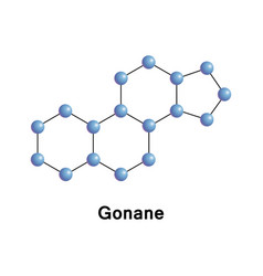 Gonane known as perhydrocyclopentaphenanthrene vector