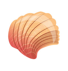 Scallop seashell an empty shell of a sea mollusk vector