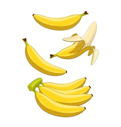 Banana tropical fruit vector