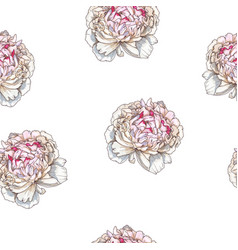Seamless pattern with gently pink peony flower vector