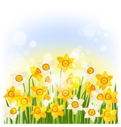Spring flowers narcissus natural background vector image vector image