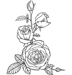 Flowers and buds of roses vector