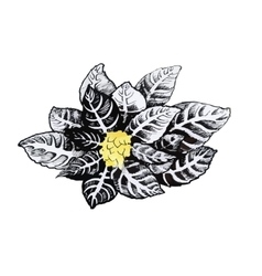 Beautiful monochrome black and white flower vector
