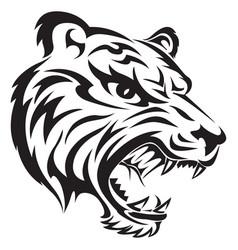 Tiger tattoo design vintage engraving vector