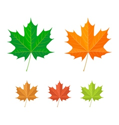 maple leaf vector image