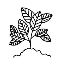 tree branch with leaves isolated icon design vector image