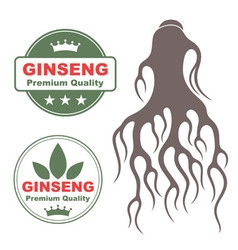 Ginseng vector image vector image