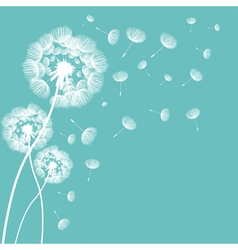 Abstract fluffy dandelion flower vector