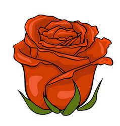 red rose bud isolated flower on white background vector image vector image
