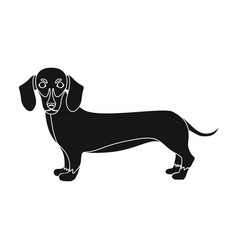 Dachshund single icon in black styledachshund vector