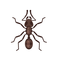 flat style of ant vector image vector image