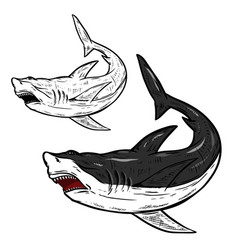 Shark isolated on white background vector