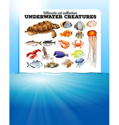 Sea animals and the ocean vector