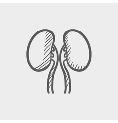 Human kidney sketch icon vector image