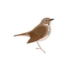 Thrush-380x400 vector image vector image