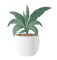 cast-iron plant with pot vector image