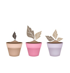 Three abstract brown trees in flower pots vector