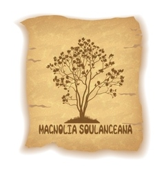 Magnolia plant on old paper vector