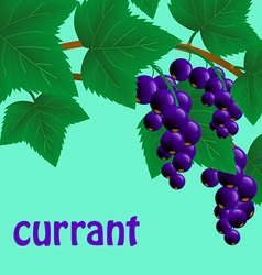 Black juicy sweet currant on a branch for your vector