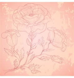 Sketch of rose branch on grungy texture vector image