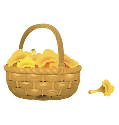 wicker basket full of chanterelles isolated vector image