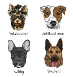 Set of drawn dogs vector