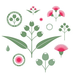 Eucalyptus set vector