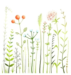 Flowers and grass on white grassland collection vector