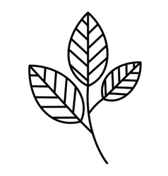 Tree branch with leaves isolated icon design vector