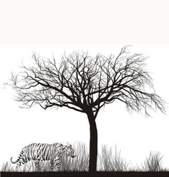 Tiger in tall grass vector