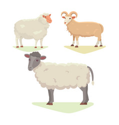 Set cute sheep and ram isolated retro vector