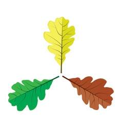 Three oak leaves vector